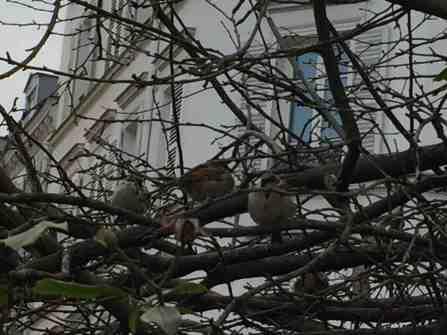 BirdsCloseUp