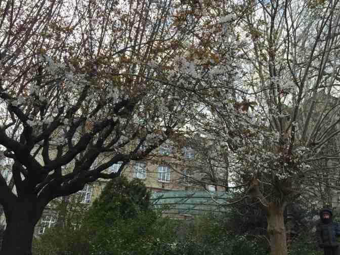 TreeBlossoms